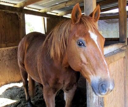 flooring options for horse stalls