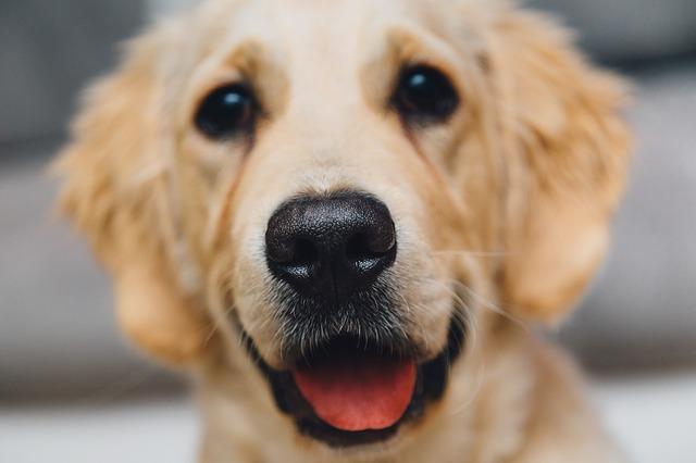 Pet shelter flooring solution
