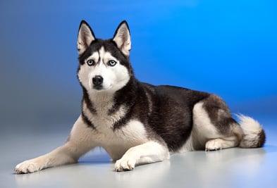 husky dog kennel floor.jpg